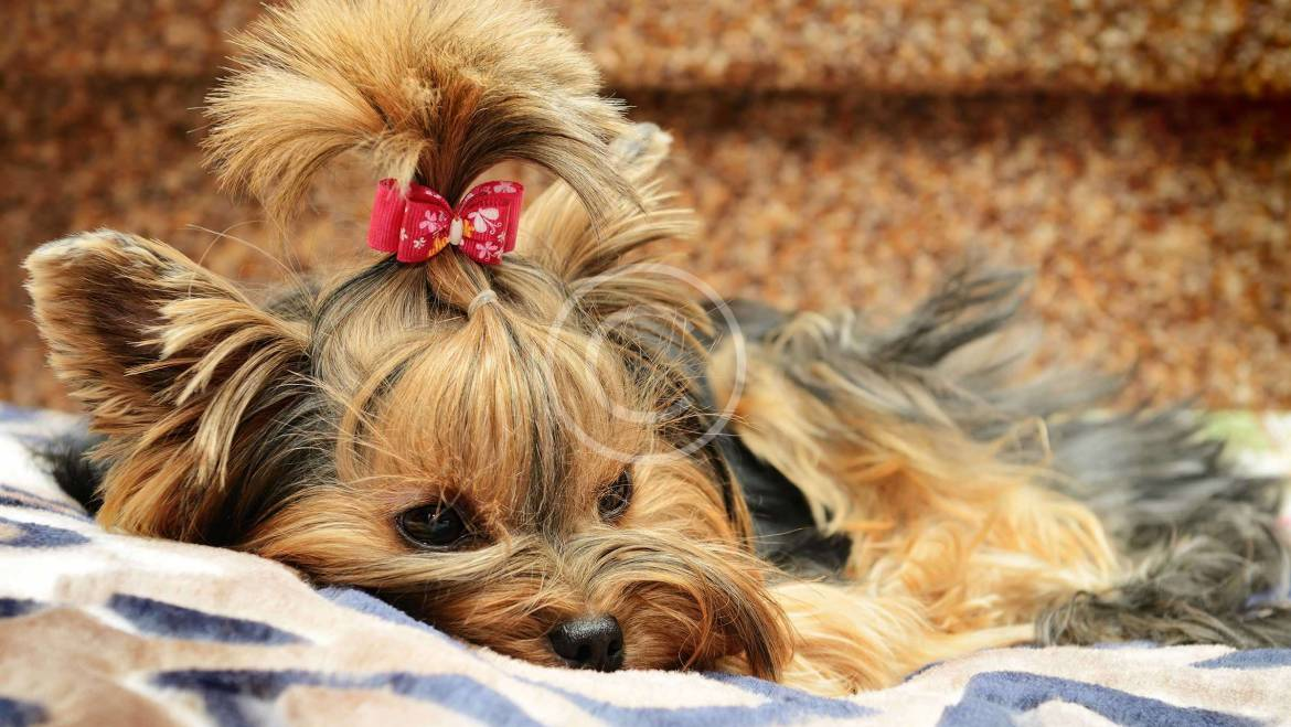 Can Pets have Allergies?