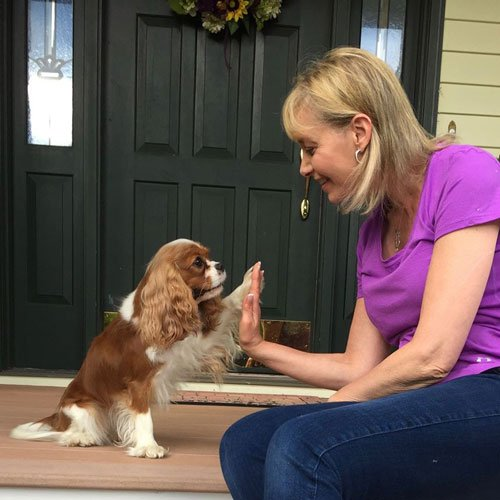 Basic Manners Training